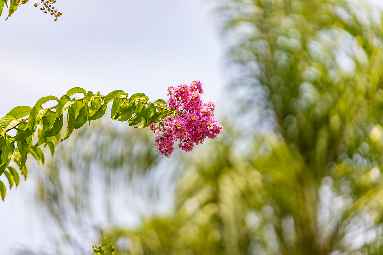 A wide variety of flowers showered throughout the community (including this Crepe Myrtle)